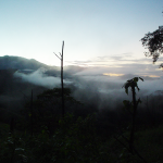 Costa Rica Cangrejal Scenery - Morning