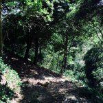 Costa Rica Cangrejal - Scenery