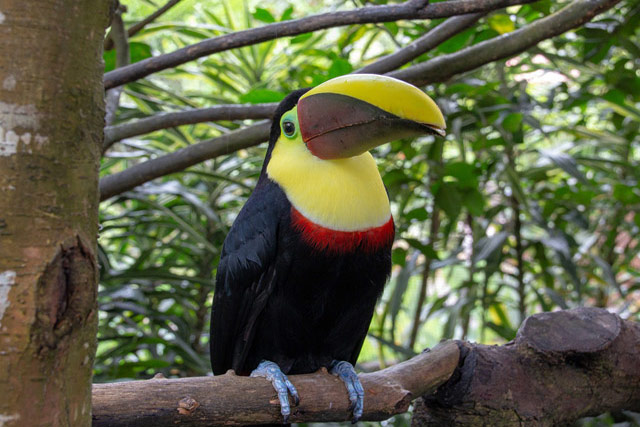 Costa Rica - Bird Watching