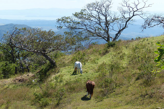 Costa Rica - Horseback Riding